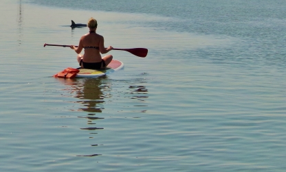 Paddlebord with the dolphins St Augustine