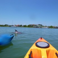 kayak-st-augustine-dolphin-tours