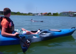 Kayak with the Dolphins!