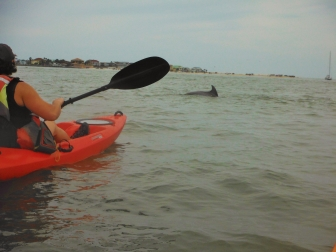 Dolphin St Augustine tours