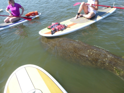 Paddleboard St Augustine!