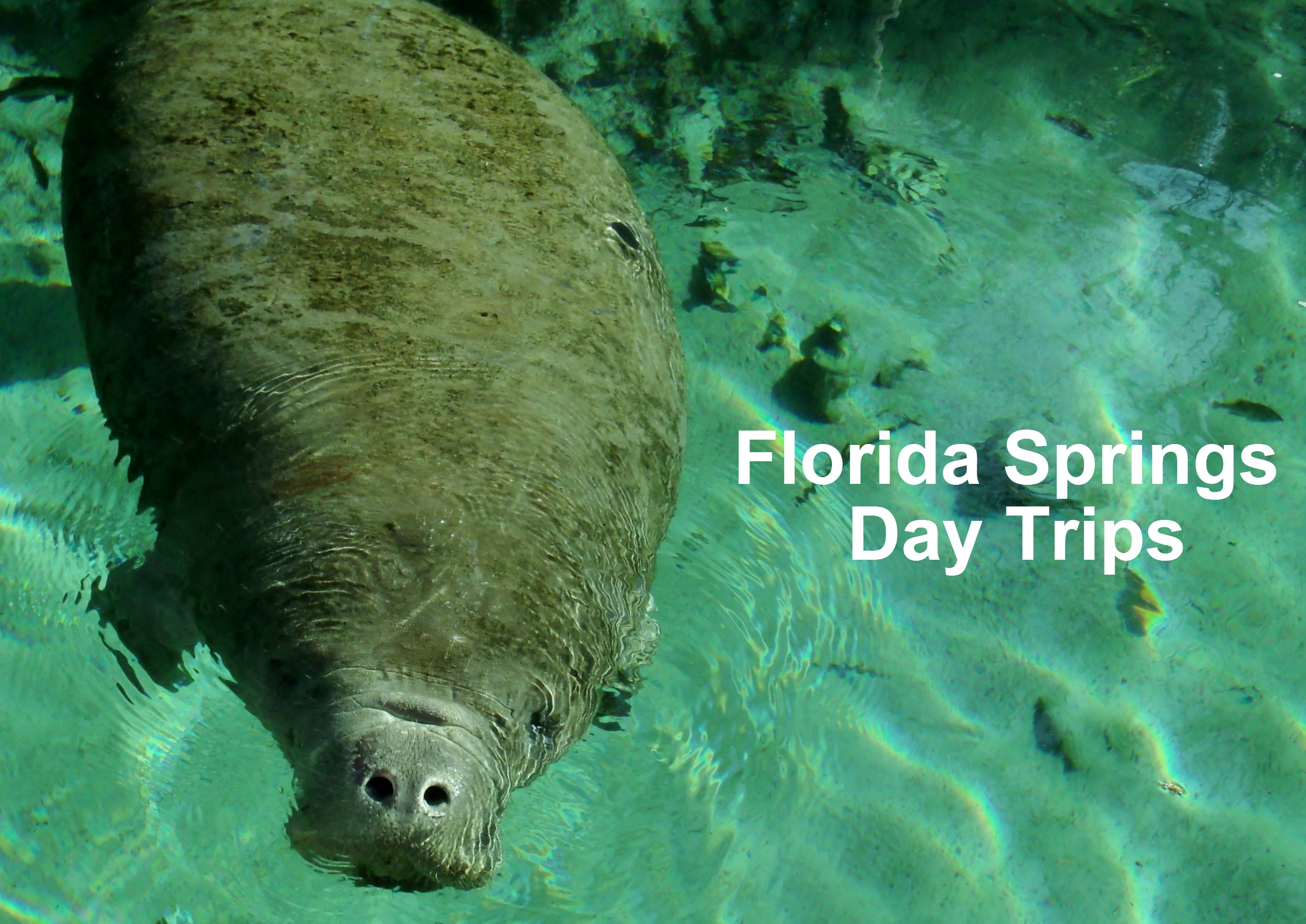 Private Kayak Day Trip ~ Silver Springs